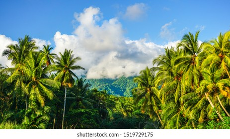 Breathtaking scenery of mountains tops covered by clouds in the background during sunny day and lush vegetation of palm trees making this natural environment spectacular. Tropical wallpaper landscape.