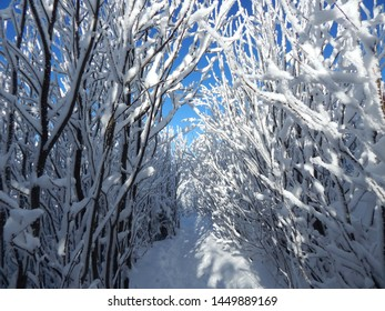 A breathtaking snowy winter walk through the forest to the top of Lysa mountain in the Beskydy Mountains in the Czech Republic.