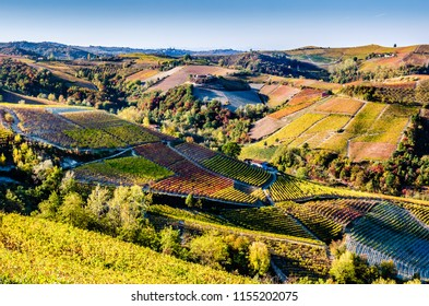 A breathtaking view of the Piedmont hills in the Langhe during the autumn, while a warm afternoon sun shines on the vines