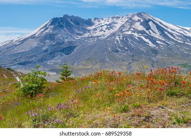 The breathtaking views of the volcano and amazing valley of flowers. Harry's Ridge Trail. Mount St Helens National Park, South Cascades in Washington State, USA