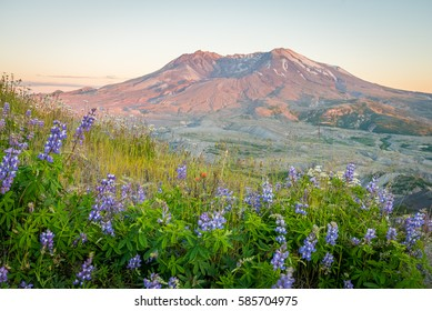 The breathtaking views of the volcano at sunset. The last rays of the sun illuminate a large crater. Loowit Viewpoint, Mount St Helens National Park, West Part, South Cascades in Washington State, USA
