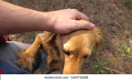 Breeder is petting his beloved dog. Walk with your pet. Happy dog with the owner. A man hand caresses dog with his tongue sticking out. Playing with a dog. Teamwork animals and humans.