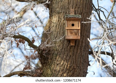 breeding box for birds in winter on a trunk of a big old oak tree with hoar frost on a sunny day