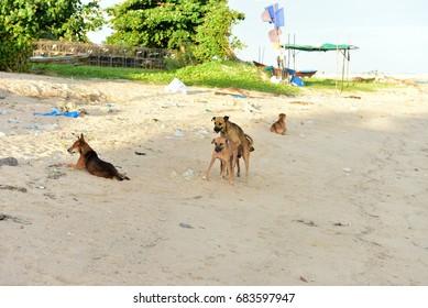 breeding Dog