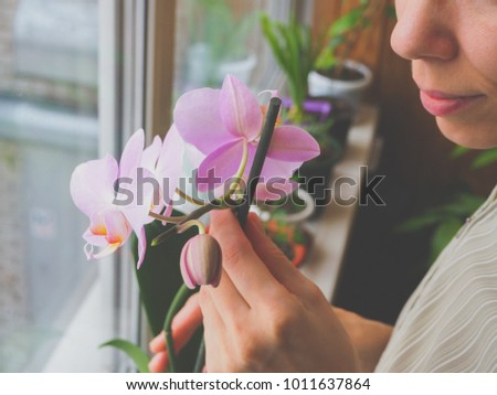 Breeding of orchids. Caring for orchids indoors.