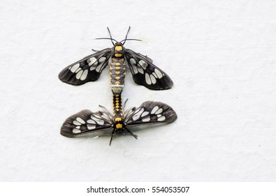 the breeding of small animals, insects moth