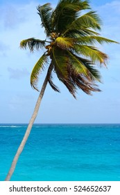 Breeze day, palm tree with turquoise sea