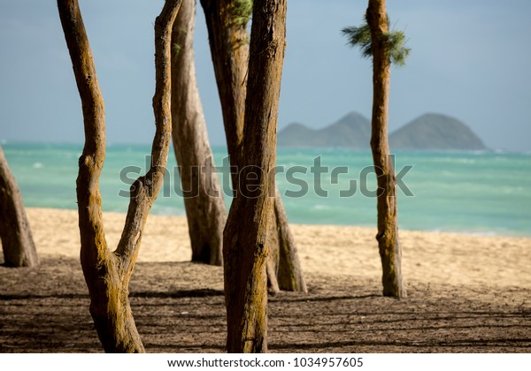 Breezy day on the East side of the Island of Oahu on a beautiful beach in Hawaii