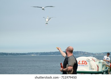 Bremerton, WA, USA Sept 4, 2017: A man on deck of ferry boat tosses snack chips into air as seagulls attempt to catch them in flight
