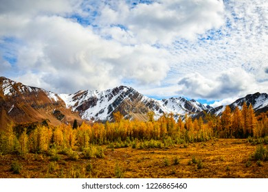 Brewer Creek, British Columbia, Canada in Fall with Golden Larch and snow covered mountains. Purcell Mountain Landscape