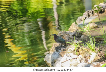The Brewer's blackbird (Euphagus cyanocephalus) is a medium-sized New World blackbird.