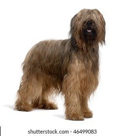 Briard dog, 4 Years Old, standing in front of white background
