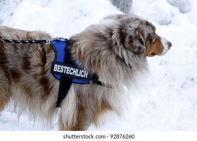 Bribable dog
