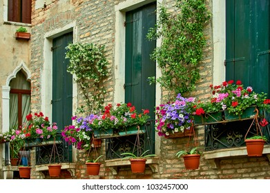 Brick facade of old house with pots of blooming flowers and closed windows with green shutters