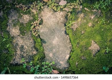 Brick flooring with moss in the rainy season garden