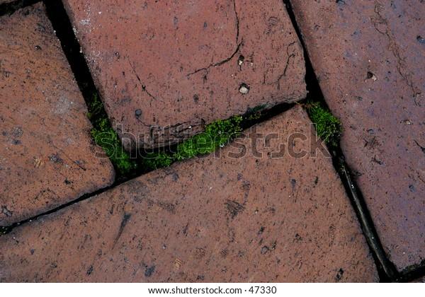 Brick Path with Moss