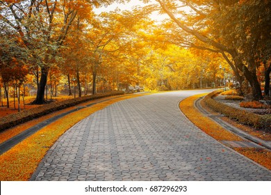 Brick road in the park, along with yellow leaves trees on both side in autumn and season change.