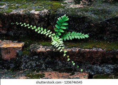 the brick stone formation with fern tree at thai temple