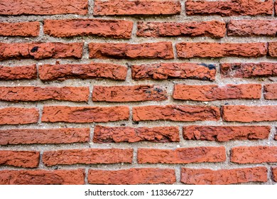 Brick wall for background.