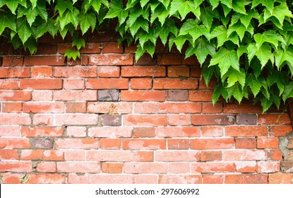 Brick wall background with tree