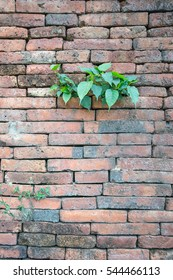 brick wall background and tree growth
