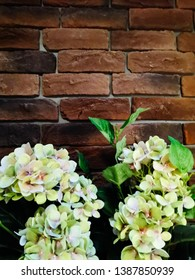 brick wall of brown heat-resistant brick with flowers, concept design of the house