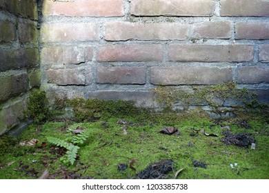 brick wall corner, mossy and fern