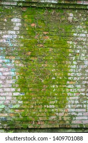 Brick wall covered with green moss. Old brick wall is wet and covered with thick moss. Texture Background. Plants growing on stones and walls