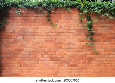 brick wall and green leaf Ivy