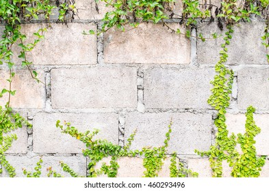 brick wall with green leaves background