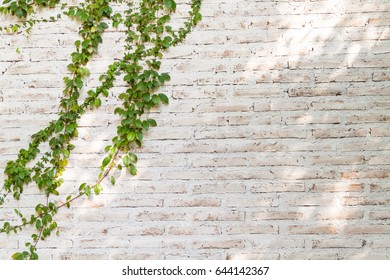 Brick wall and green vine background,