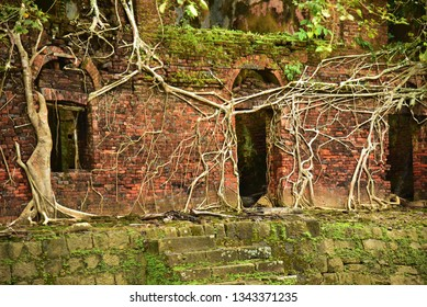 Brick wall of an old ruined building covered with aerial roots of a banyan tree. Haunted house.