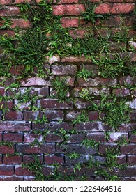 Bricks covered in trawl and moss