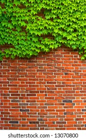 Bricks and Ivy - Hedera