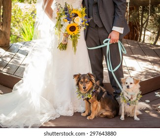 bride and groom with boy and girl dog on blue leash