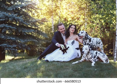 The bride and groom sitting in yard with their dogs at their wedding. Dalmatians with their newly wed owners.