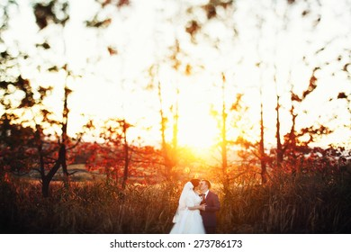 bride and groom walking kissing near trees sunset rise autumn