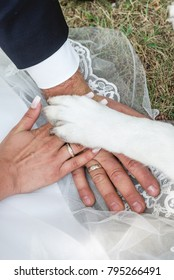 Bride and grooms hands with their wedding rings and dogs paw on it