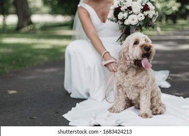 Bride on her Wedding day with her pup visiting for a cuddle