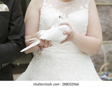 a bride in white wedding dress holding a dove in your hand