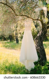 The bride's dress hangs on a hanger on an olive tree. Collecting brides in an olive grove in Montenegro. Wedding in Europe.