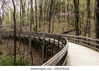 Bridge along the forest with trees
