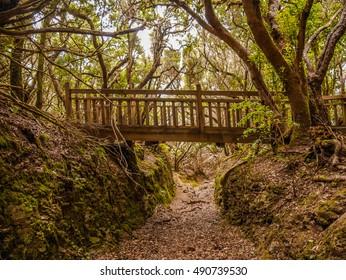 Bridge in Anaga mountains on trail Sendero de Sentidos, Tenerife, Canary Islands, Spain