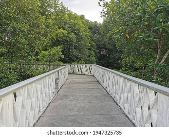 A bridge between mangrove tree. This picture was taken at Mangrove reserve forest Malaysia