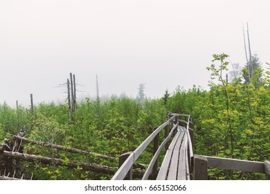 Bridge in a forest