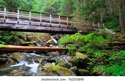 A Bridge and Lush Forest Near The Snoqualmie River.  North Bend, Washington