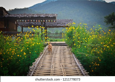The bridge is made of bamboo. The scenery is a green field. And step