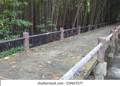 Bridge in Mangrove Forest