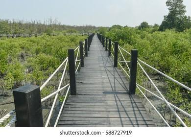 Bridge in The Mangrove Wood Walkway.