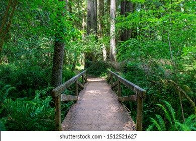 Bridge in Massive Redwood Forest of Northern California - Jedediah Smith Redwoods State Park, California, USA